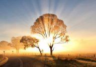 cropped-morning-sunrise-wallpaper-768x432.jpg