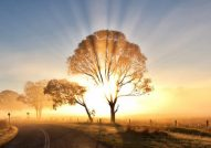 cropped-morning-sunrise-wallpaper-768x432.jpg