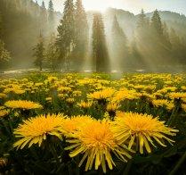 morning_glory_by_borda-da52cl3